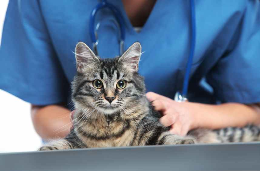 Veterinary caring of a cute cat