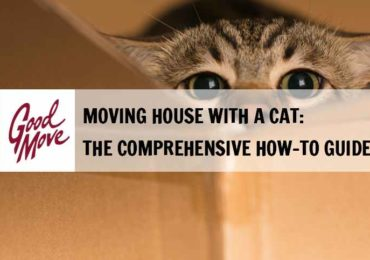 Moving House with a Cat: A Comprehensive Guide