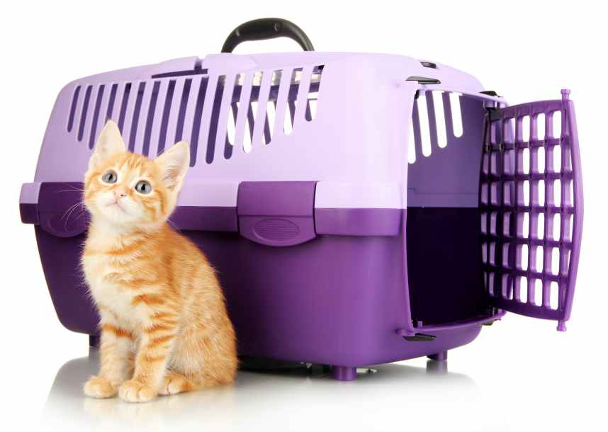 Cute little red kitten with travel plastic cage isolated on white