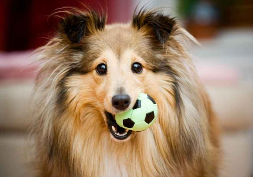 Dog with ball in it's mouth