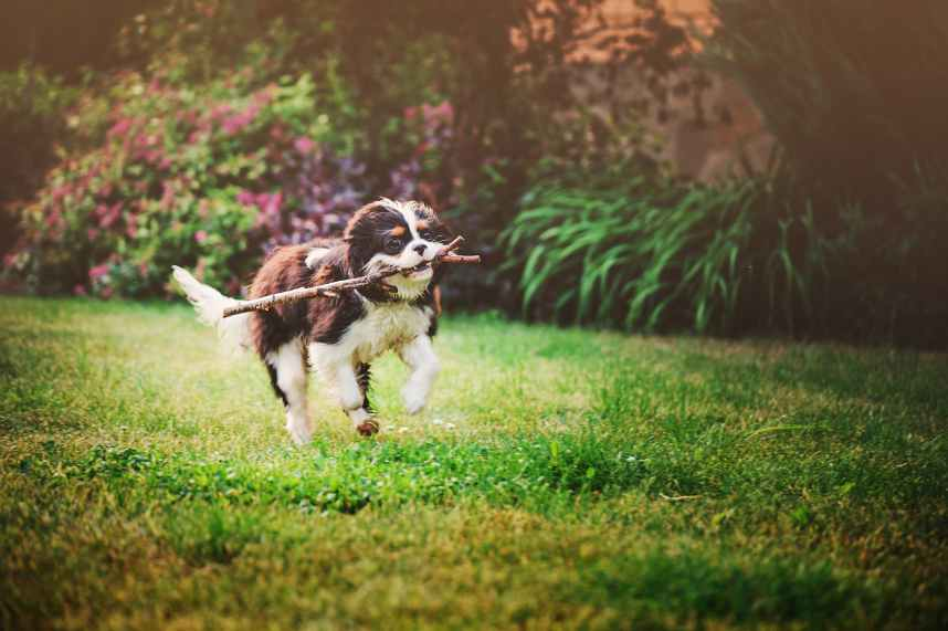 Dog running in garden