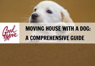 Moving House with a Dog: A Comprehensive Guide