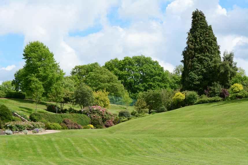 Beautiful mowed lawn park